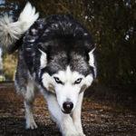 Ripassare Esopo : Il lupo Italia accusa l'agnello Svezia
