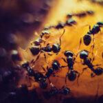 sovrappopolazione-formiche